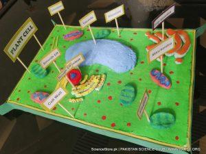 Plant Cell Model Kit